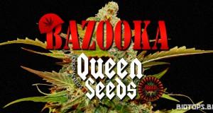 la bazooka est en vente chez queen-seeds.fr