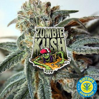Zombie Kush vendue chez Biotops