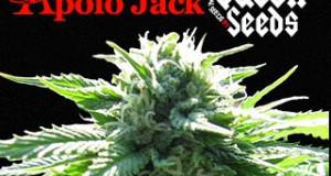 Apolo Jack