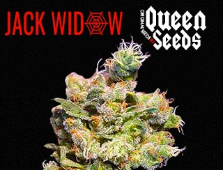 la fameuse Jack Widow