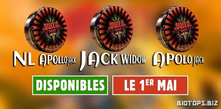 NL Apollo G13, Jack Widow et Apolo Jack