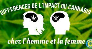 impact du cannabis