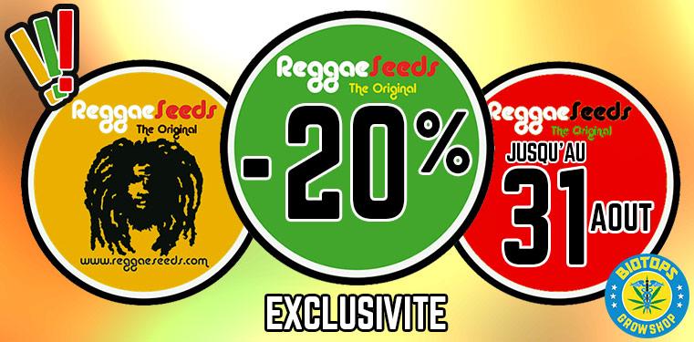 --20-%-sur-tout-reggae-seeds-une