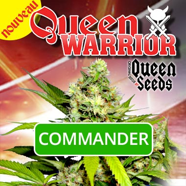 Acheter-Queen-Warrior-Queen-Seeds