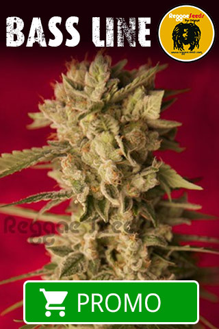 bass-line-reggae-seeds---20-%