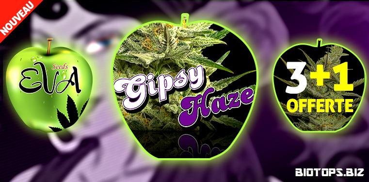 Gipsy Haze
