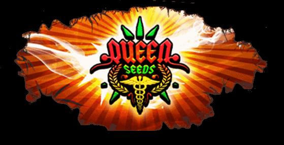 graines de cannabis au meilleur prix