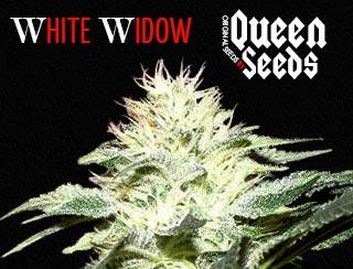 la fameuse whit widow