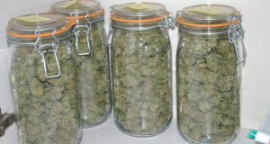 Séchage et conservation du cannabis de divers manières
