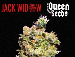 Qui ne connait pas la Jack widow