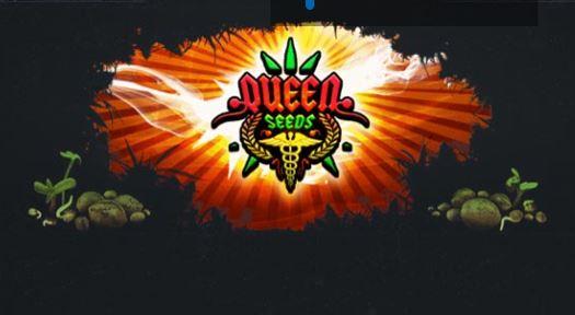 Graine de cannabis autofloraison