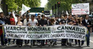 Hamon cannabis ce que dit le candidat