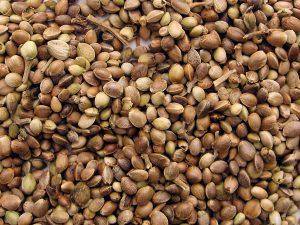Les graines cannabis Queen Seeds sont disponible chez biotops.biz