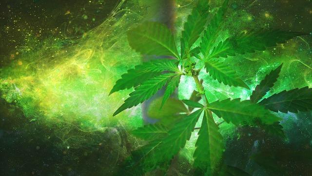 les meilleures graines de cannabis sont chez biotops.biz