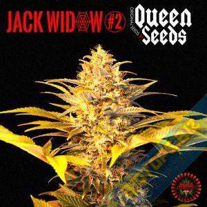 Graines de cannabis Jack Widow 2.0 en vente chez biotops.biz
