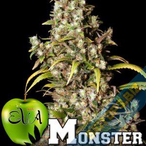 Des plantes monstrueuse avec les graines cannabis monster
