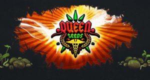 Seedbank Queen-Seeds graines de qualité à prix réduit chez biotops ou chez queen-seeds