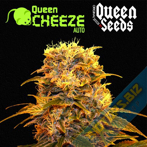 conseils de culture autoflo queen-cheese Queen-Seeds