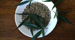 Voici Comment faire des graines de cannabis avec blog.biotops.biz