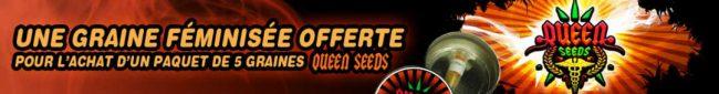 acheter des graines de cannabis queen-seeds