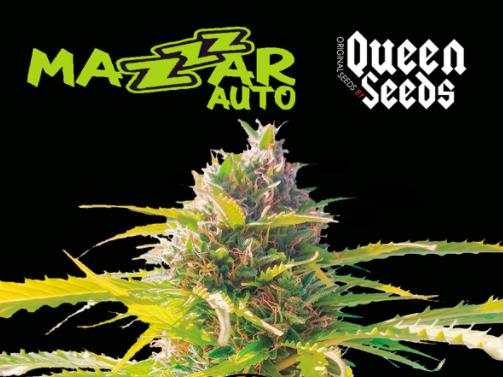 autoflo Queen Seeds