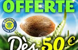 Promotion sur les graines de cannabis des 50 euros