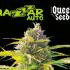 autoflo Queen Seeds Mazar