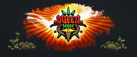 génétiques Queen Seeds